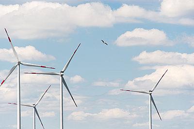 Weißstorch durchfliegt Windpark - p1079m1184975 von Ulrich Mertens