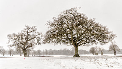 UK, snow-covered winter landscape with bare trees - p300m2028728 by Alun Richardson