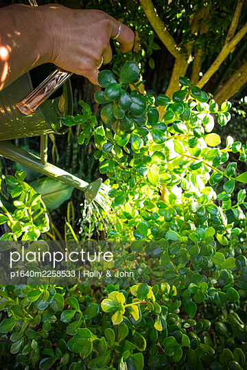 Woman watering plants in the garden - p1640m2258533 by Holly & John