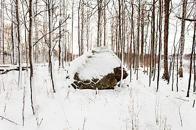 Findlinge, Eiszeit - p1272m1115494 von Steffen Scheyhing