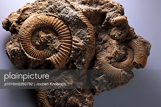 Petrified ammonite, close-up - p1016m2260792 by Jochen Knobloch