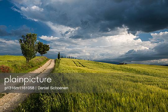 Landschaft bei Pienza, Val d`Orcia, Provinz Siena, Toskana, Italien, UNESCO Welterbe - p1316m1161058 von Daniel Schoenen