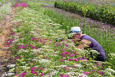 Woman taking picture of flowers on field - p300m978064f by Maria Breuer