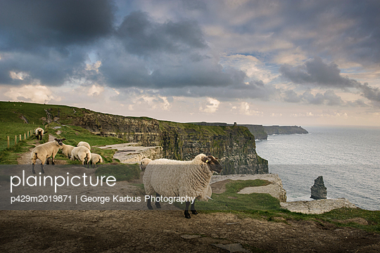 p429m2019871 von George Karbus Photography