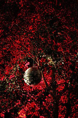 Diskokugel in einem Baum im roten Licht - p1685m2272454 von Joy Kröger