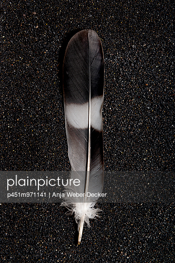 Feather - p451m971141 by Anja Weber-Decker