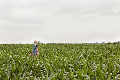 Sweet corn field - p294m1069497 by Paolo
