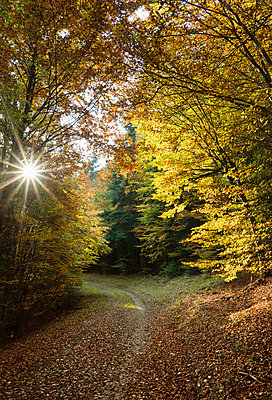 Forest in Meerfeld, Rheinland-Pfalz, Germany - p429m1514011 by Mischa Keijser