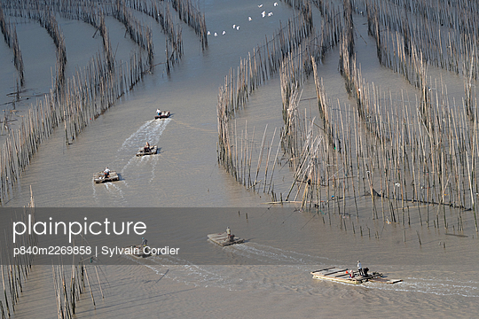 Men on rafts at low tide, moving through bamboo poles used for fishing and aquaculture. Xiapu County, Fujiang Province, China - p840m2269858 by Sylvain Cordier