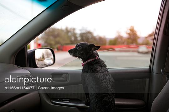 p1166m1154077 von Cavan Images