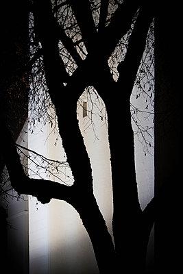 Silhouette - p1149m1193357 by Yvonne Röder