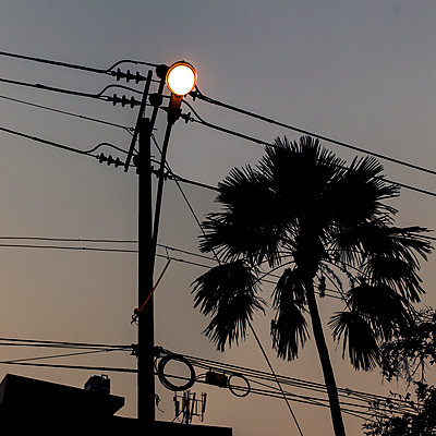 Power lines and single palm tree at night - p1324m1165229 by michaelhopf