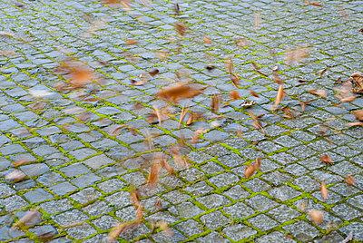 Herbstwind - p3050176 von Dirk Morla