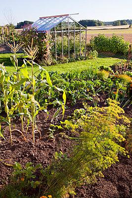 Vegetable patch - p312m996568f by Lena Granefelt