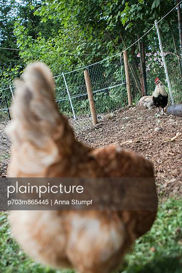 Chicks - p703m865445 by Anna Stumpf
