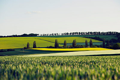 Landscape near Bennhausen in the Palatinate - p2687572 by Rudi Sebastian