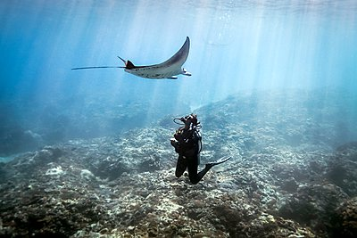 A Manta Ray (Manta alfredi) swimming over a scuba diver , Bali, Indonesia - p429m1062855 by Steve Woods Photography