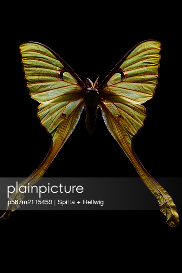 Butterfly - p587m2115459 by Spitta + Hellwig
