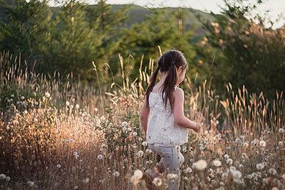Girl with pigtails walking amidst dandelion field - p1166m1534196 by Cavan Images