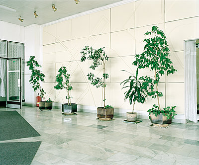 Foyer decorated with potted plants - p1320m1222074 by Matija Brumen