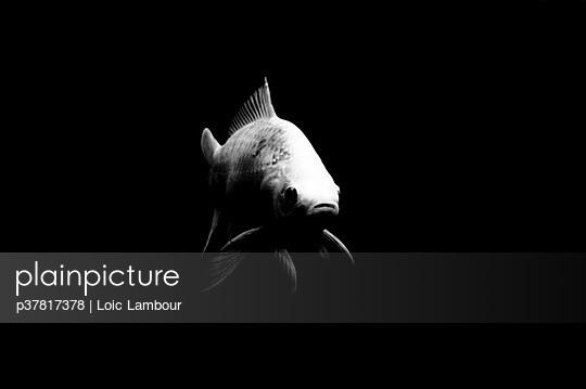 p37817378 von Loic Lambour