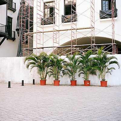 Plants in front of a building site - p1177m970396 by Philip Frowein