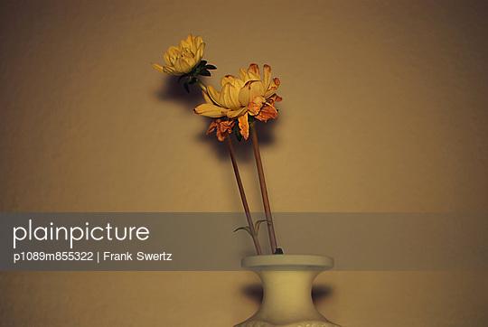 Verwelken - p1089m855322 von Frank Swertz