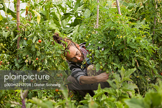 Austria, Schiltern, Alternative gardener at work - p300m2213708 by Dieter Schewig