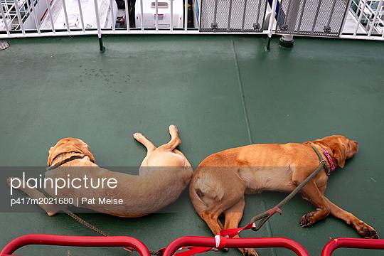 Hunde - p417m2021680 von Pat Meise