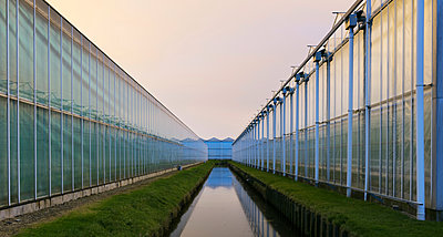 Greenhouses at dusk, in Westland, area with the highest concentration of greenhouses in Netherlands - p429m1557415 by Mischa Keijser