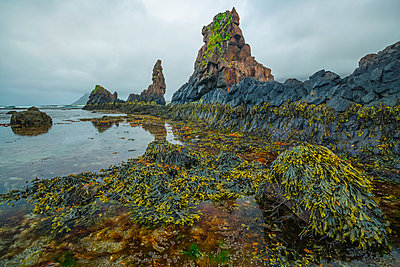The low tide reveals a lush world of life under the water along the Strandir Coast; Djupavik, West Fjords, Iceland - p442m2004307 by Robert Postma