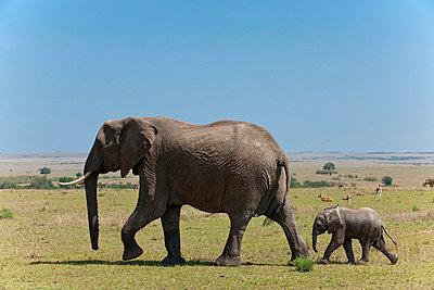 Masai Mara National Park - p5330353 by Böhm Monika