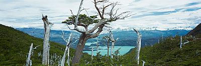 Torres del Paine - p844m1118958 von Markus Renner