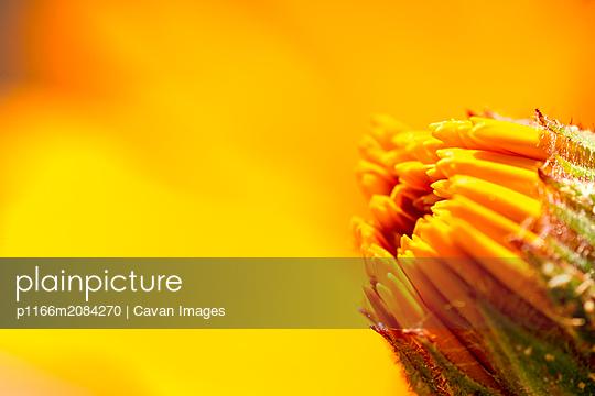 p1166m2084270 von Cavan Images