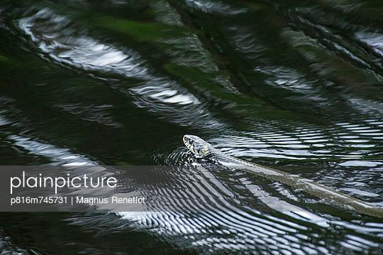 p816m745731 von Magnus Reneflot