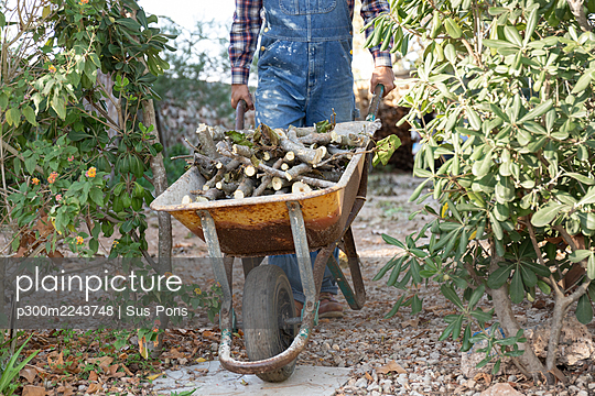 Young man pushing wheelbarrow filled with firewood - p300m2243748 by Sus Pons
