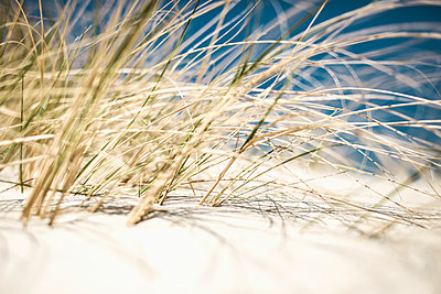 Close-up of grass growing on sand - p301m1101965f by Sebastian Doerken