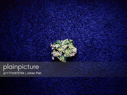 Plastikblume auf blauem Teppich - p1177m972704 von Philip Frowein