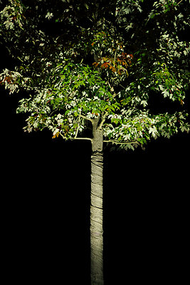 Small tree light at night - p1540m2122014 by Marie Tercafs