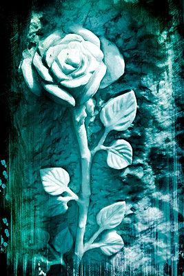 Rose auf einem Friedhof - p9790396 von Weber-Decker