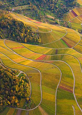 Germany, Baden-Wuerttemberg, Stuttgart, aerial view of vineyards at Rotenberg - p300m978053f by Werner Dieterich