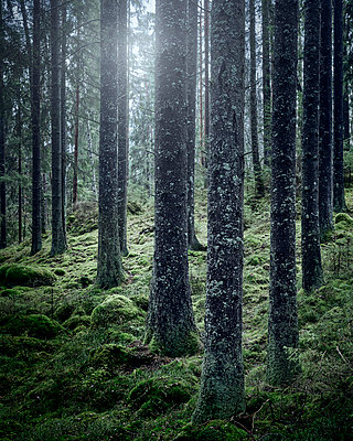 Forest - p312m1228964 by Stefan Isaksson