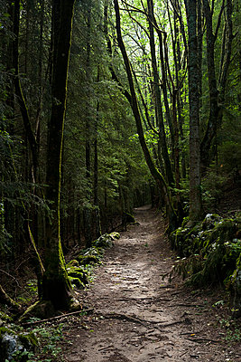 Path through woods in Ardeche in France - p3313623 by Andrea Alborno