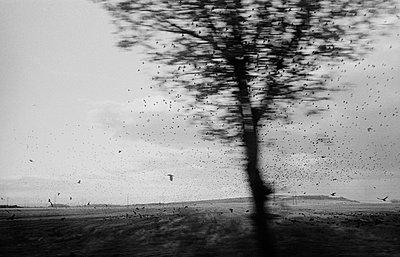 Vogelschwarm - p1020m816524 von Aaron Alexandersson