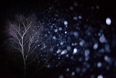 Snowflakes at night - p335m1111404 by Andreas Körner