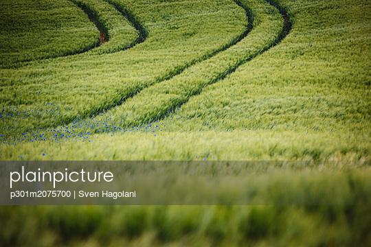 p301m2075700 von Sven Hagolani