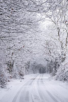Schneebedeckte Allee mit Reifenspuren - p1057m2057283 von Stephen Shepherd