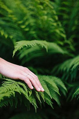 Hand touching fern leaves - p586m1067887 by Kniel Synnatzschke