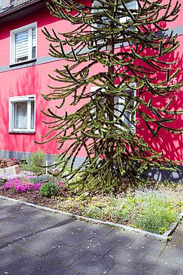 Spießiger Vorgarten - p432m1424182 von mia takahara