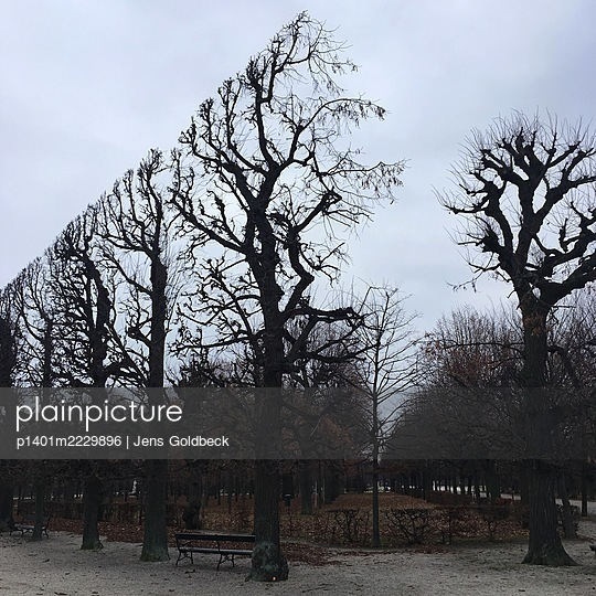 Topiary trees in autumn, Schönbrunn castle grounds - p1401m2229896 by Jens Goldbeck
